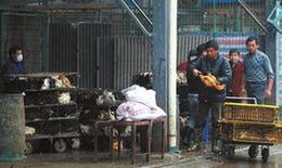 上海6日起暫停活禽交易,關閉所有活禽交易市場。新華社發
