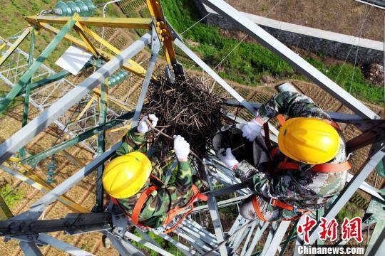 湘西电力员工高空拆除电塔鸟窝