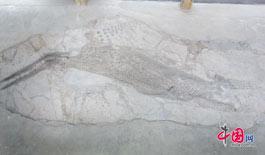 探索世界罕见化石库——关岭国家地质公园