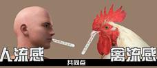 H7N9是动物流感病毒 偶尔感染人类