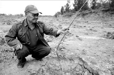 農田中的樹苗要麼被折斷要麼被拔掉。