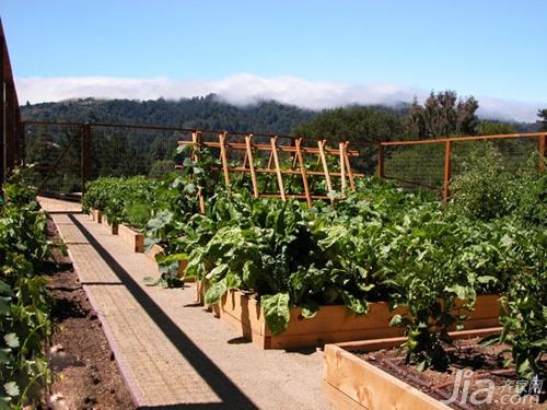 16个阳台蔬菜种植案