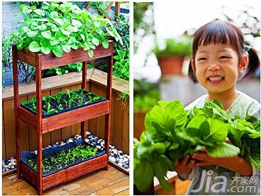 好看又好吃 16个阳台蔬菜种植案例