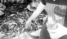 武汉河垴因龙卷风停电 鱼缺氧死亡致损失逾百万