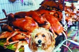 不少待宰活犬是宠物狗。
