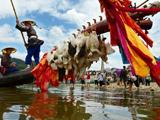 【图片故事】国家级非遗:贵州黔东南独木龙舟节