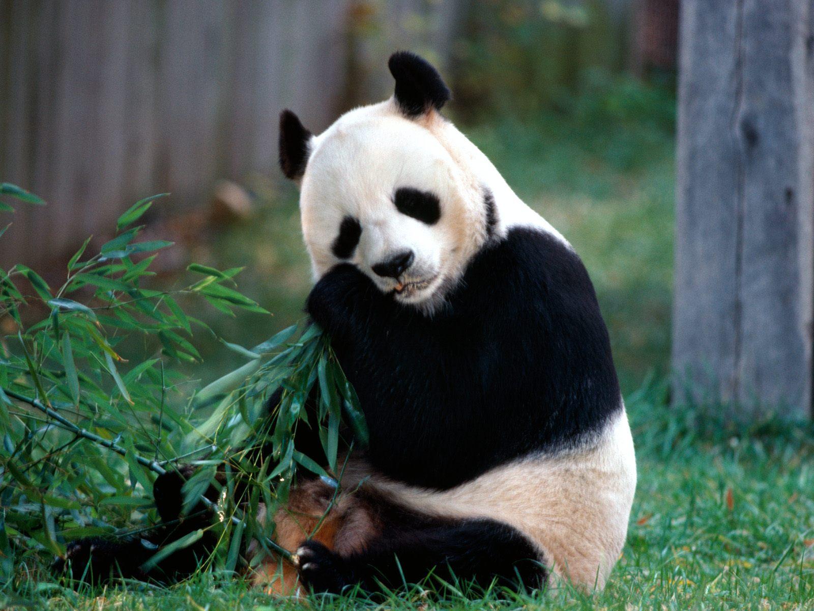 熊猫手机 熊猫手机大全 熊猫手机报价 3533手机世界