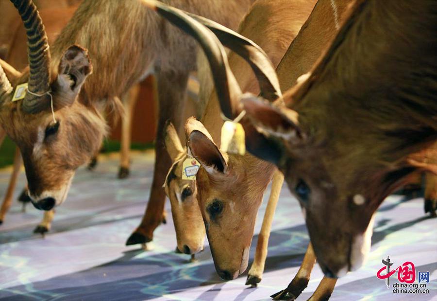 《非洲动物探秘》大型科普展览(中国网图片库 阿舍摄影)