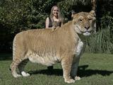全球令人惊奇的罕见奇异动物