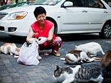 李逢华:救助流浪猫15年