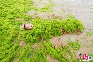 """2013年7月18日,青岛,一个用浒苔""""包裹""""自己的男孩。  中国网图片库 王海滨 摄影"""