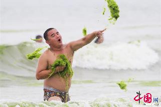 2013年7月18日,青岛,浒苔大战中,一位游客用浒苔还击对方。  中国网图片库 王海滨 摄影
