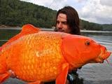 令人惊叹!盘点全球人类捕获的巨型大鱼