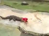 泰鳄鱼表演失控 驯兽师鳄口逃生[组图]
