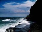 涠洲岛 红海榄 红树林植物 鼓虾 桐花树