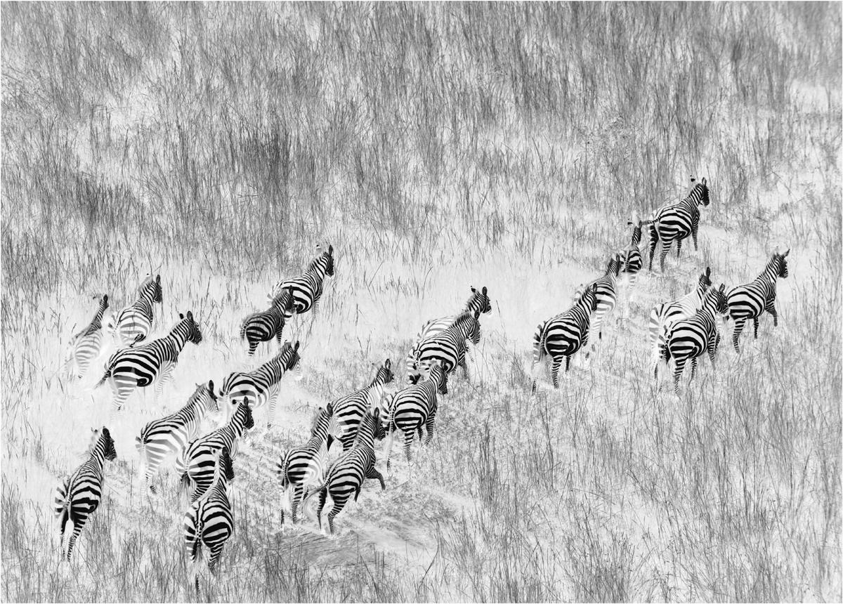 生活着成千上万的野生动物