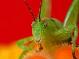 比利时摄影师近距离拍摄昆虫世界
