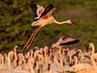 肯尼亚:博格利亚火烈鸟印象[看世界]