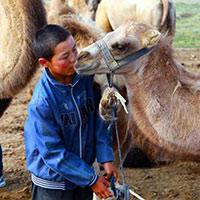 【图片故事】哈萨克小牧民叶尔江家的牧驼生活