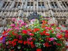 比利时:精致花艺亮相布鲁塞尔[组图]