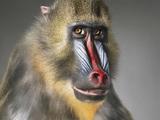 盘点动物充满灵性的人性化肖像:震撼心灵