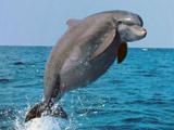 你没见过的动物发福照:胖海豚令人捧腹