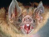自然界10大恐怖动物
