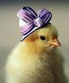 美小鸡戴时髦帽子拍萌照 百变潮帽全都能hold住