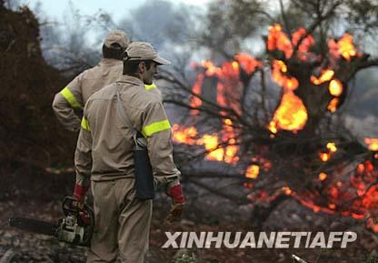 希腊罗德岛发生森林大火图片
