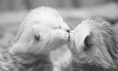 当它们恋爱了!动物热恋中的感人瞬间