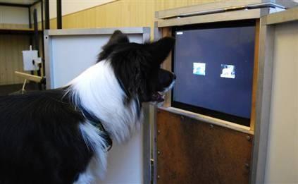 作为人类最好的朋友,狗总是坚决服从主人的命令