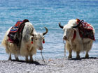 多彩西藏夏季行:从美丽圣湖到青藏高原腹地[组图]