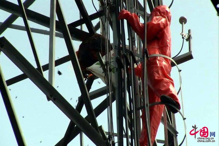安徽亳州:消防30米高空摘除巨型马蜂窝[组图]