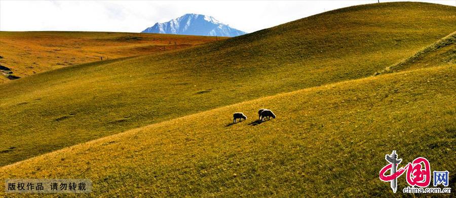甘肃张掖秋天的康乐草原。中国网图片库 王将/摄