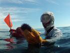 日本:裸潜渔女 千年历史难传承[组图]
