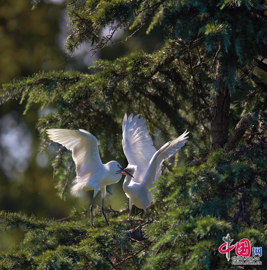 【亲】摄于上海崇明