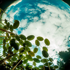 风光摄影:沼泽之心