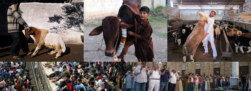 各国穆斯林喜迎传统节日宰牲节[组图]