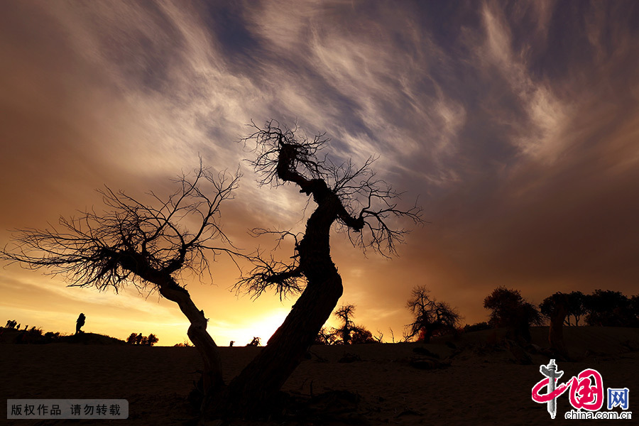 落日苍茫,晚霞一抹,胡杨林由金黄变成金红,最后化为一片褐红,渐渐地融入朦胧的夜色之中。 中国网图片库 敬海全/摄