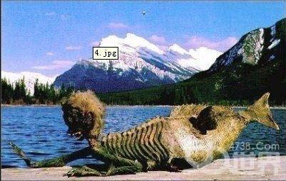 美人鱼/惊现真实美人鱼尸体:美丽还是恐怖?! 一些科学家正在竭力设法找到...