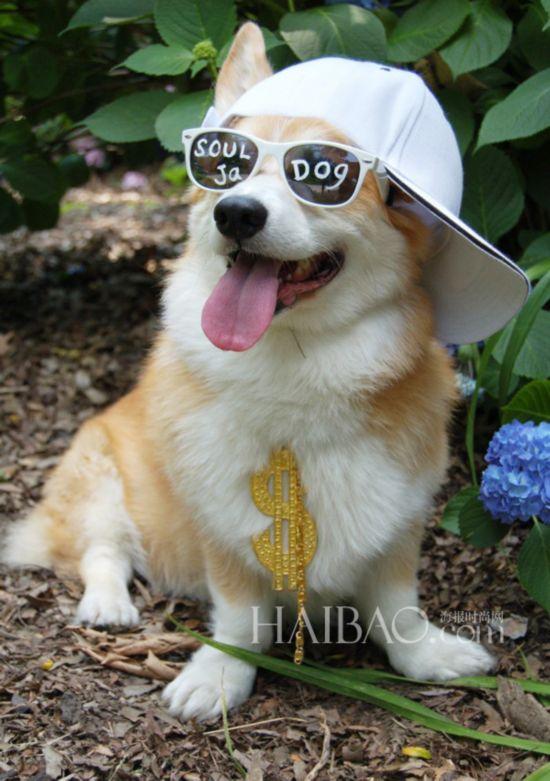 戴上帽子萌度翻倍!一起来看看可爱动物的帽饰特辑