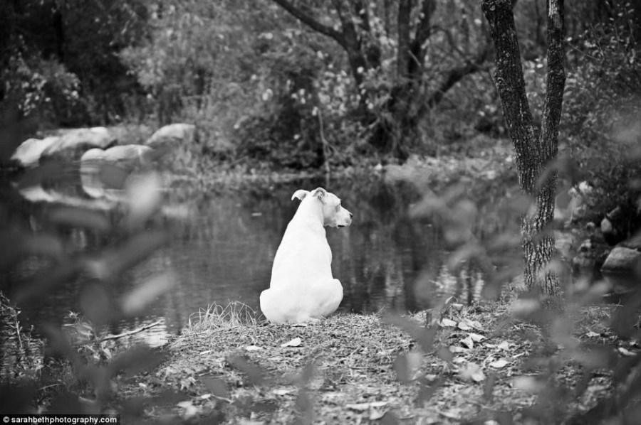 """主人 宠物/""""临终照片""""中的宠物都是因为衰老或疾病而即将离世。"""