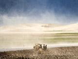 我的靈魂留在了雪域高原——記者江宏景的藏地情懷