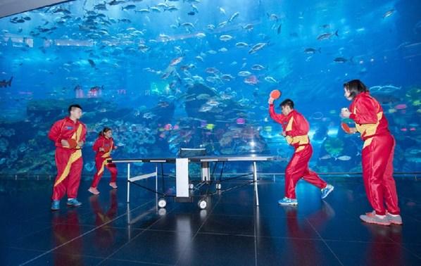 壁纸 海底/壁纸海报海底_海底世界动态壁纸_海底电脑桌面