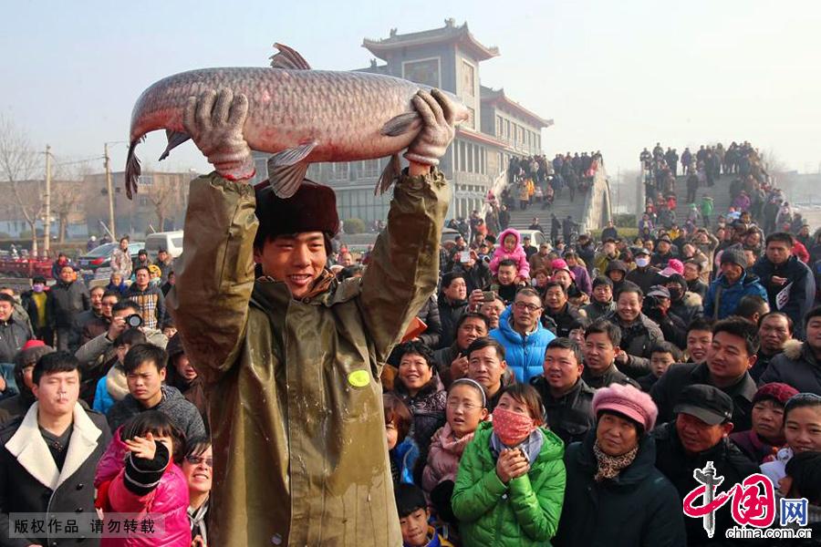 """圖為一位漁業工作人員展示一條""""鯉魚魚王""""。 中國網圖片庫 李俊生/攝"""