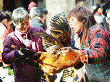 杭州:受禽流感影響 節前活禽交易量價齊跳水[組圖]