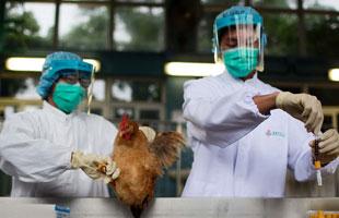上海研制完成H7N9禽流感疫苗