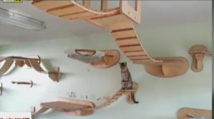 这哪里是DIY猫窝 明明就是喵星人的硬纸板乐园!