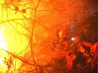四川冕宁森林火灾仍未完全扑灭 已燃烧三天