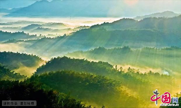 一望无际的竹子连川连岭,整整覆盖了500多座山丘。 中国网图片库 毛智/摄